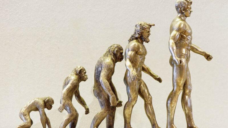 etapy ewolucji, małpa, stojąca małpa. wyprostowany małpo człowiek, człowiek